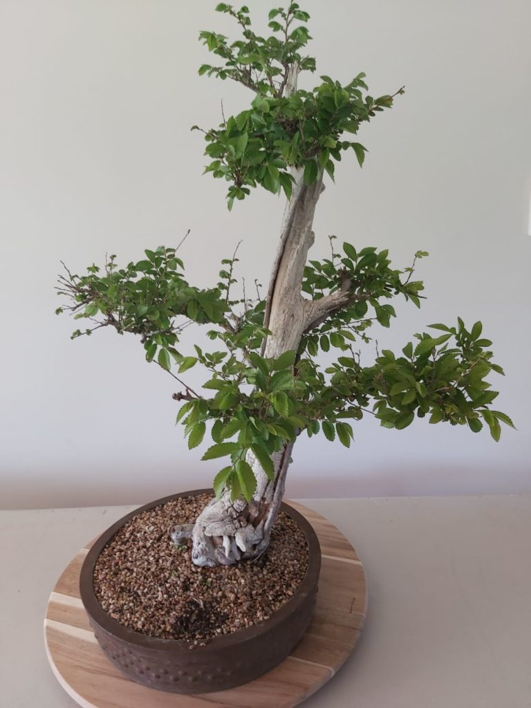 Bonsai tree - safety, quality, risk assessments & auditing services